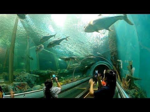 ระยองอควาเรี่ยม บ้านเพ ระยอง Rayong Aquarium