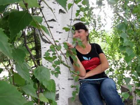 Энергия деревьев. Берёза - дерево жизни.
