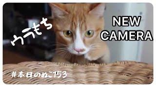 本日のぬこ153【SONYのVLOGCAM ZV-1Gで猫を撮影しました】