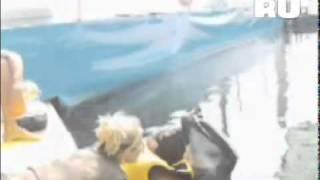 Дельфин помог прозреть слепой девочке