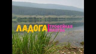 Русская рыбалка 4 Троф плотва на Ладоге