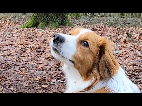 doit aimer les chiens datant du Royaume-Uni