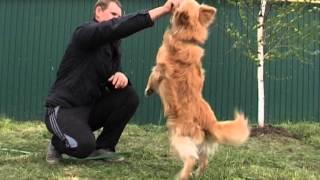 дрессировка беспородной собаки  харьков приют