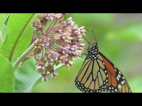 Virginia Native Plant Society Conserves Heroes Winner Connections