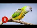 This Pint-Sized Parrot Has A Big Personality