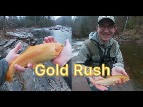 WV Gold Rush Trout Fishing! - Part 1
