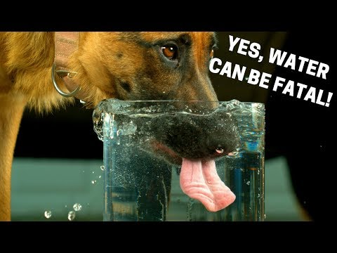 How Much Water Should Dogs Drink? How To Check For Dehydration In Dogs.