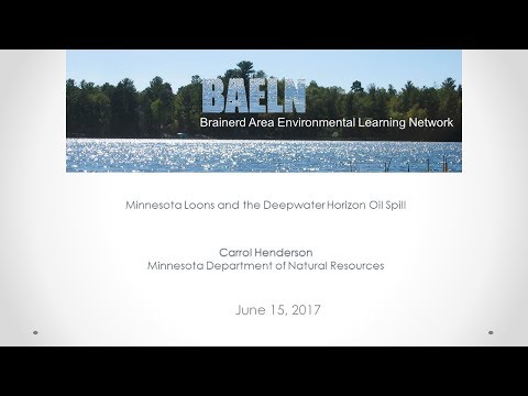 Minnesota Loons and the Deepwater Horizon Oil Spill - BAELN 6-15-2017