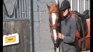 un petit cheval qui est toute ma vie