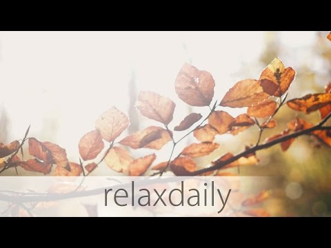 Slow & Soft Music - work, studying, relaxing, nature - N°013 (4K)