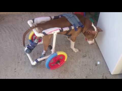 Silla de ruedas para perro casera youtube - Ruedas para sillas de ruedas ...