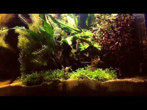 Freshwater plant nano tank with LED