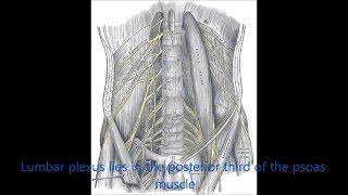 Subcostal Lumbar plexus block