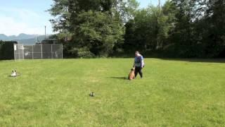 Staffordshire Bull Terrier Joker