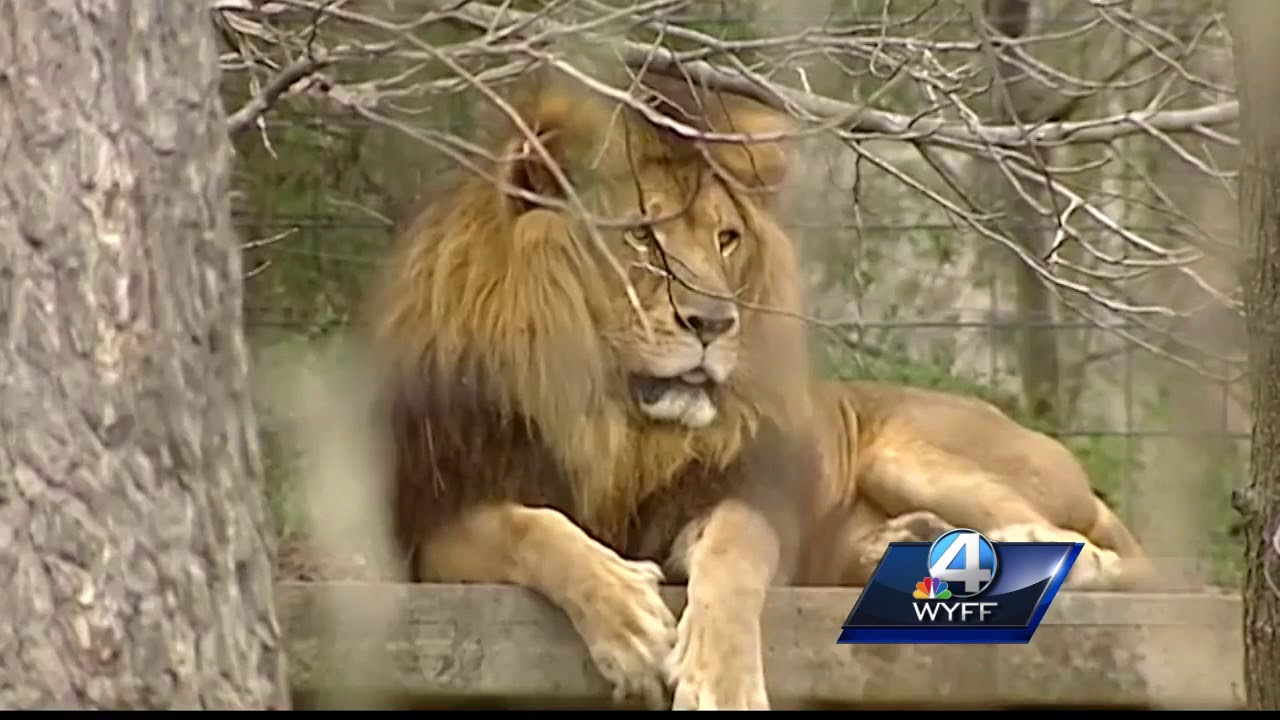 Hollywild Animal Park to continue holiday lights - YouTube