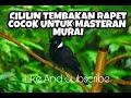 Masteran Cililin Tembakan Rapet Cocok Untuk Murai Batu  Mp3 - Mp4 Download