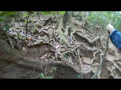Australia - Cape Tribulation - Mount Sorrow trail