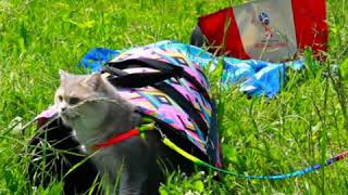 Кот гуляет, кошачий гамак, полезна кошкам трава?