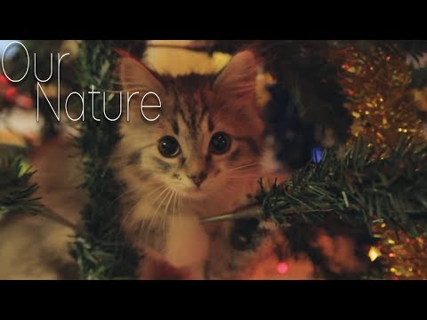Kitty in the Christmas Tree! Kittens Playing in Christmas Trees Compilation 2017