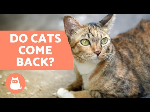 download Do Cats Come Back Home If They Run Away?