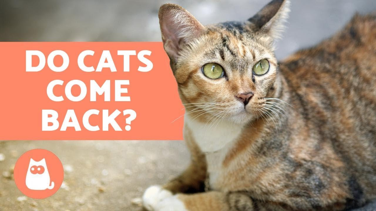 How To Get An Escaped House Cat To Come Home 11 Steps