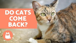 Do Cats Come Back Home If They Run Away?