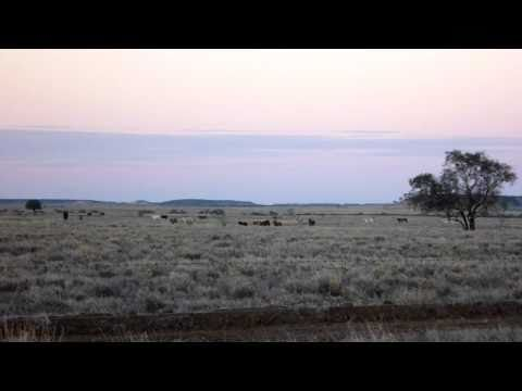Cattle - on the way to Winton QLD