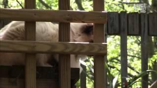 Введение в котоводство Animal Planet S02E03