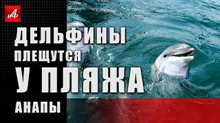 Природа настолько очистилась, что дельфины вернулись в Анапу