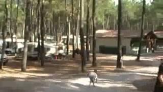 Camping de ouf Les Tourterelles à St Girons (40)