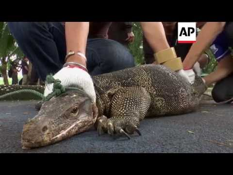 Bangkok - Park overrun with monitor lizards | Editor's Pick | 20 Sept 16
