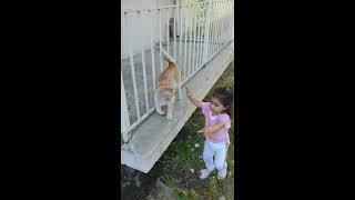 Nazlı ile kedinin eğlenceli anlari 2020