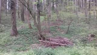 рассказ  лес и птицы