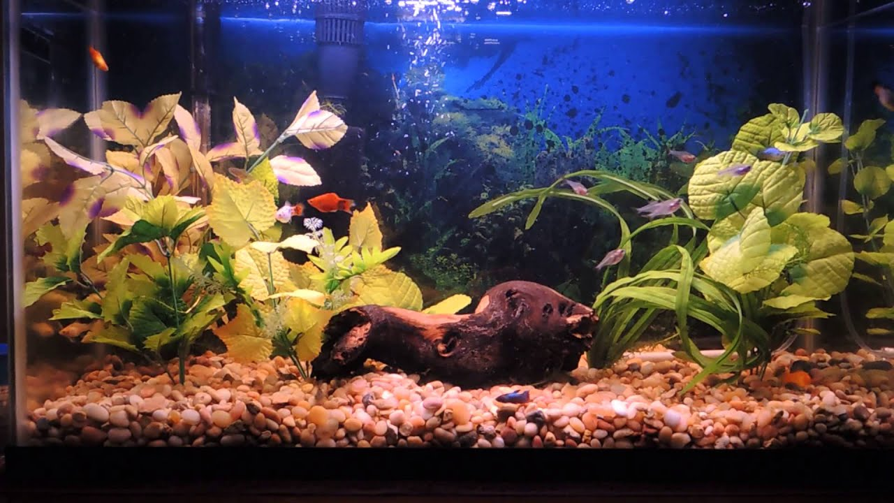 Freshwater aquarium fish that like high ph - Freshwater Aquarium Fish Like High Ph My Finished Hardwater High Ph Fishtank