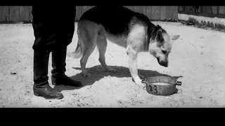 Ко мне, Мухтар (часть 3) Советский художественный фильм