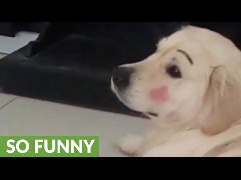 Kid gives dog adorably funny makeover