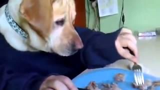 Приколы с животными, прикол с собаками