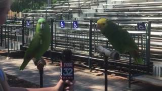Reporter Interviews Two Parrots & Request To Sing.
