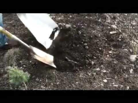 Old Man Shovel     Starring