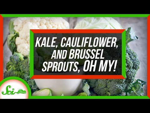 Kale, Cauliflower, and Brussels Sprouts Are the Same Species