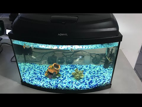 How to Deep Clean Fish Tank!