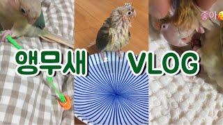 앵무새의 일상 Vlog