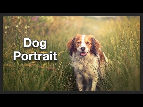 Dog Photo | Portrait | Photoshop | Speed Edit