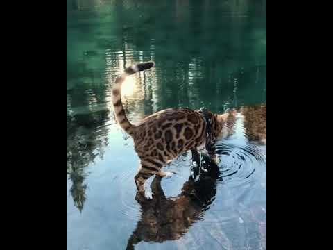 Cat LOVES playing in water