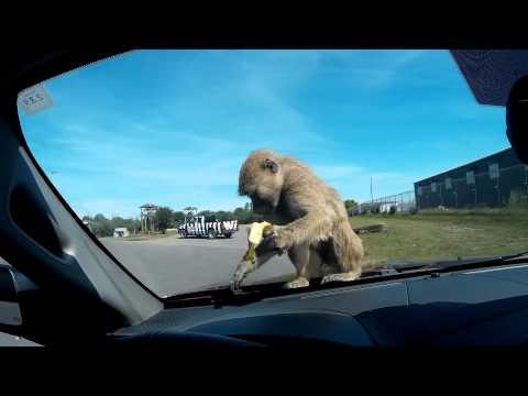 AFRICAN LION SAFARI CANADA 2015