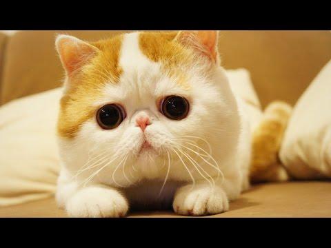 Картинки кошки на рабочий стол скачать