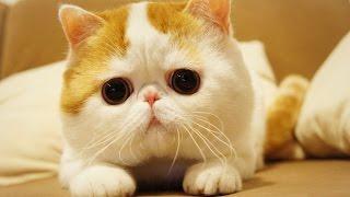 Топ 10 самых красивых пород кошек в мире