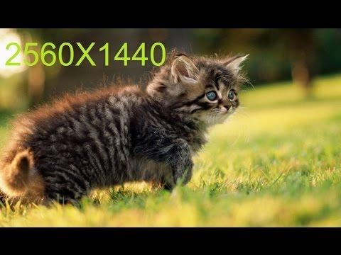 Туториал-Как сделать картинку размером 2560x1440 (Шапка для YouTube)
