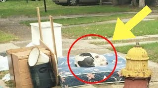 This Dog's Family Moved And Left Him On The Curb. Weeks Later, He Was Still Waiting For Their Return