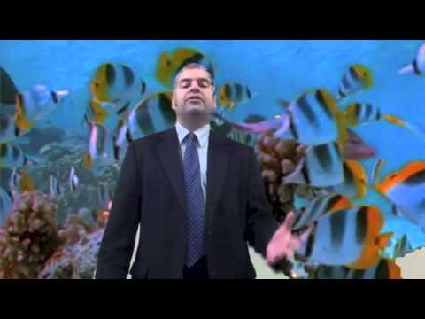 2013 Real Estate Market - Fish video
